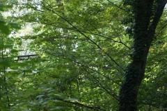 Die Natur holt sich ihren Bereich zurück